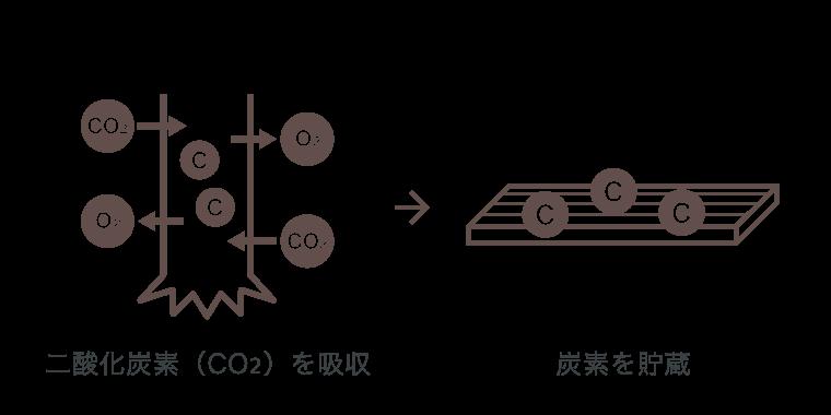 二酸化炭素(CO2)を吸収 → 炭素を貯蔵
